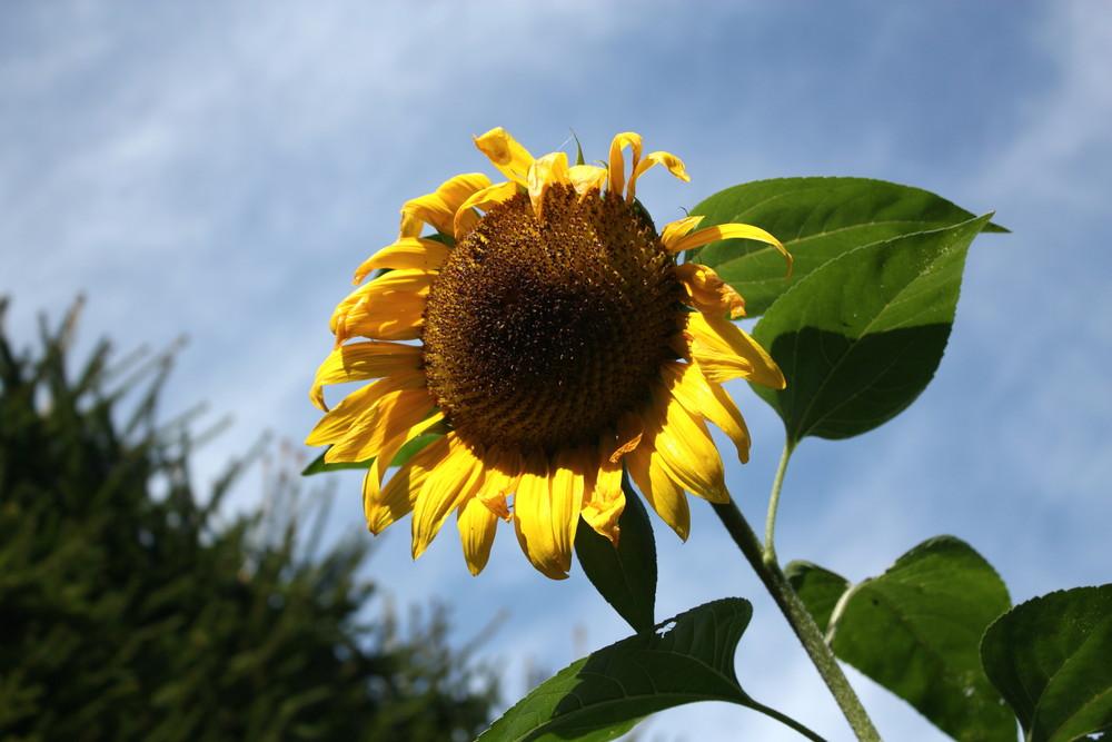 Sonnenschein auch am Herbstanfang....
