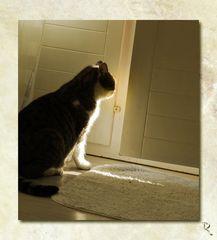 Sonnenschein in Aussicht