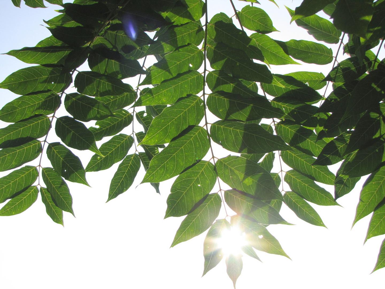 Sonnenschein und Blattgrün