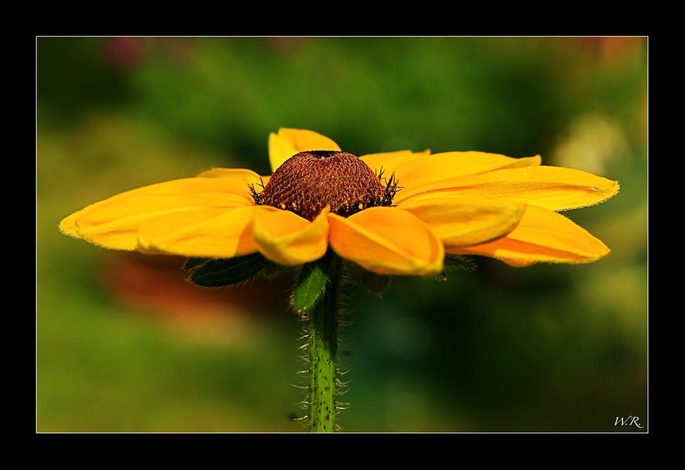 Sonnenschirm... ääähhhhh.... Sonnenhut :-))