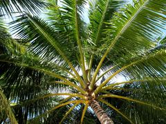 Sonnenschirm - Kanifinolhu, Nordmale Atoll