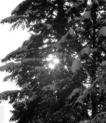 Sonnensterne
