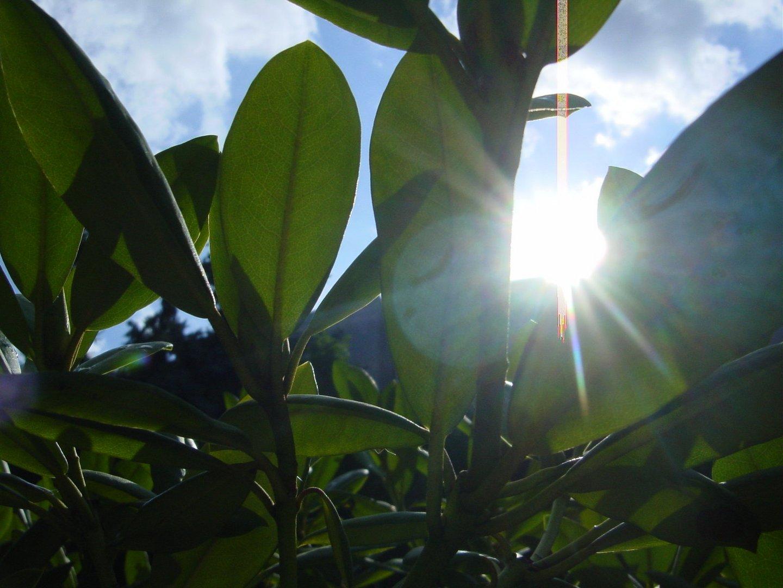 Sonnenstrahlen durch Blätter