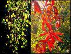 Sonnenstrahlen im Frühling und im Herbst