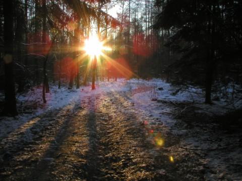 Sonnenstrahlen im Winter