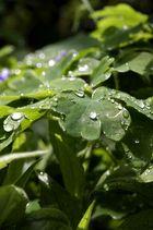 Sonnenstrahlen nach dem Regenguss