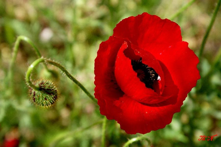 Sonnenstrahlen öffnen Blüte