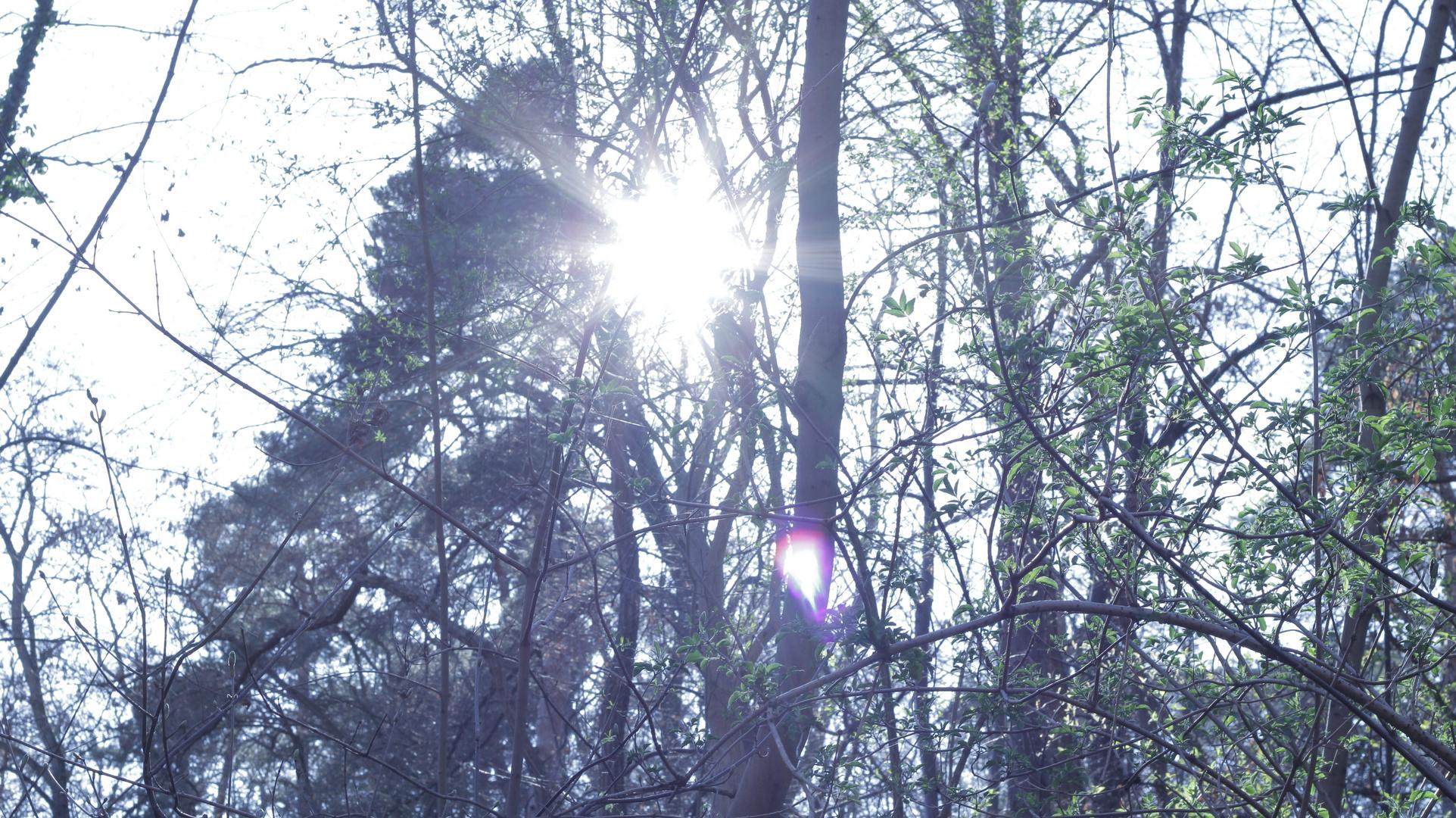 Sonnenstrahlen über Gonsenheim
