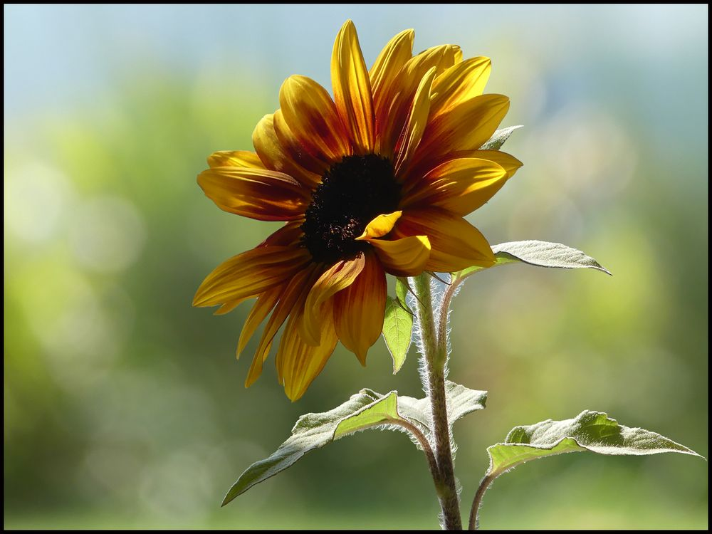 SonnenSucher...