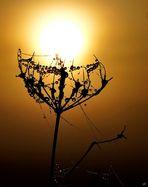 Sonnenträger