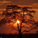 Sonnenuntergänge in Afrika... nirgendwo so schön