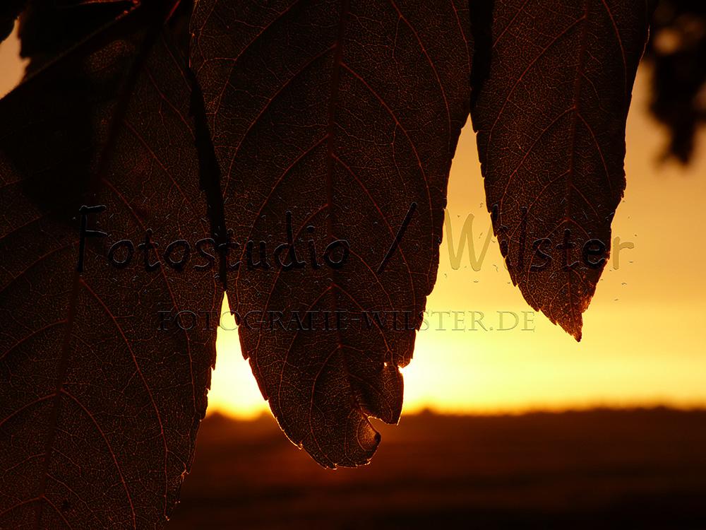 Sonnenuntergang 03