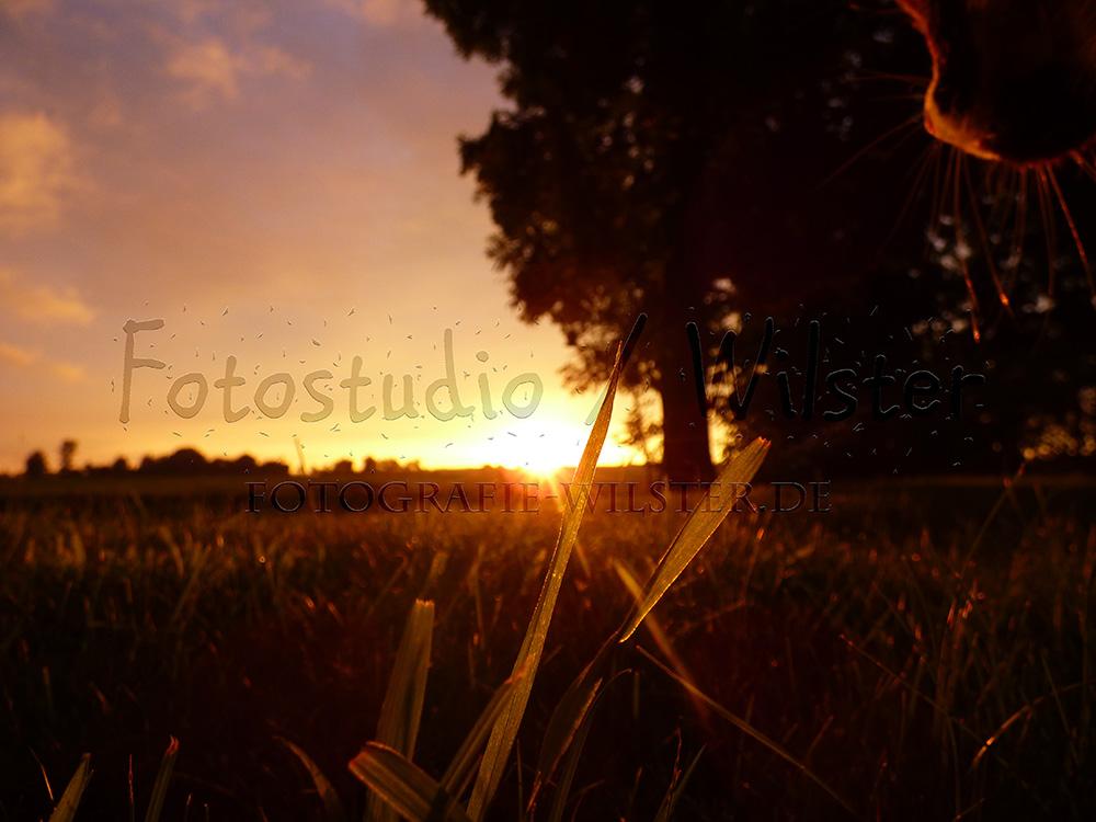 Sonnenuntergang 04