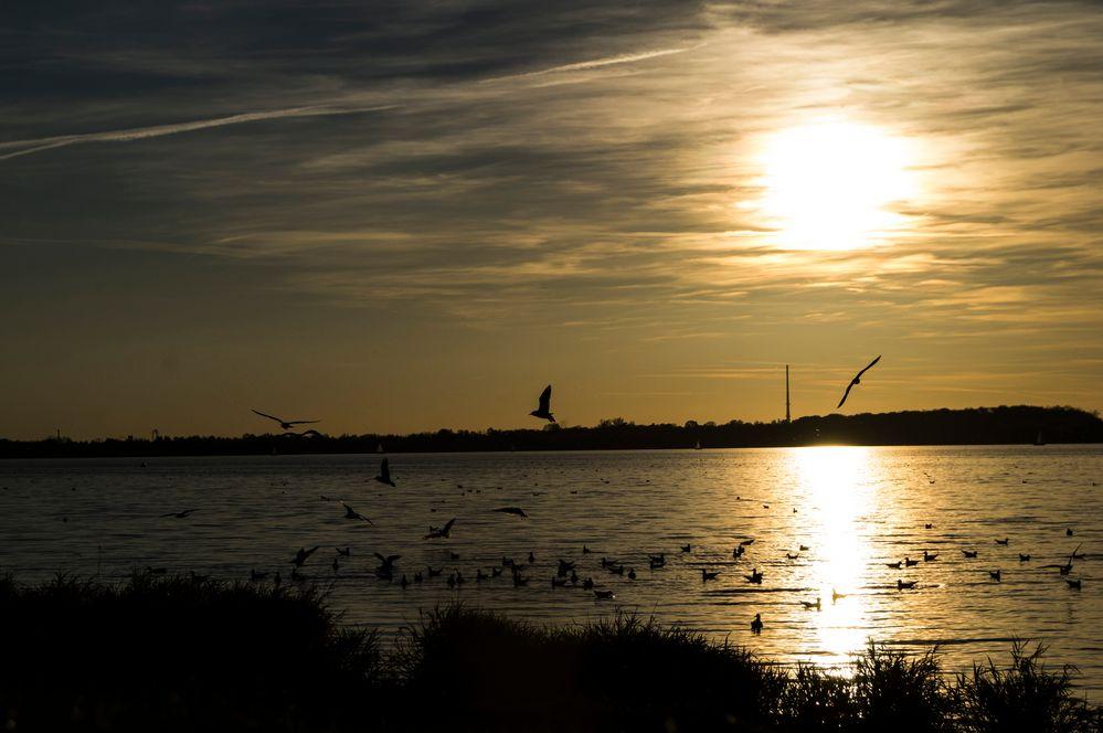 Sonnenuntergang am Cospudener See bei Leipzig