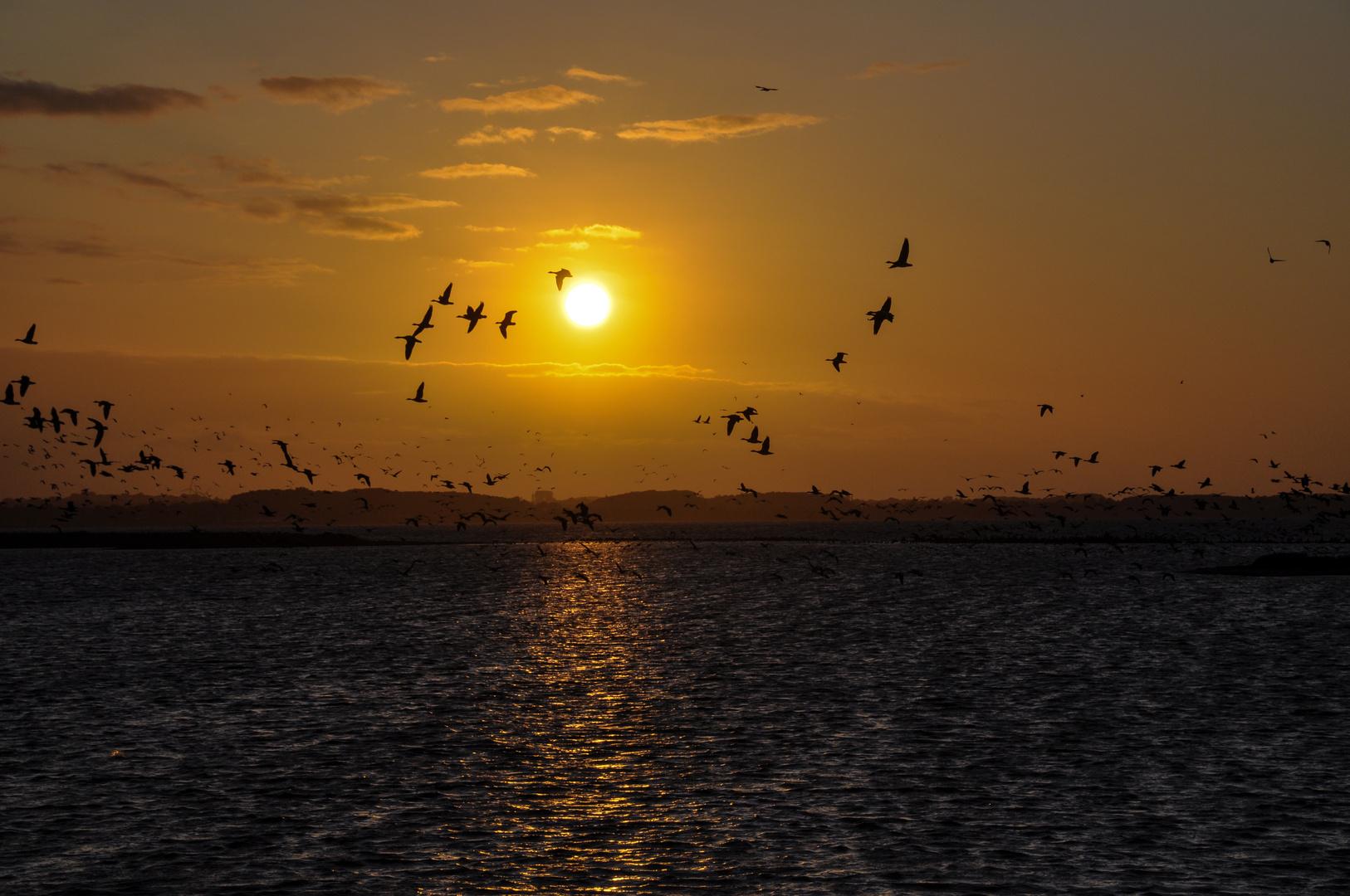 Sonnenuntergang am Geltinger Birk