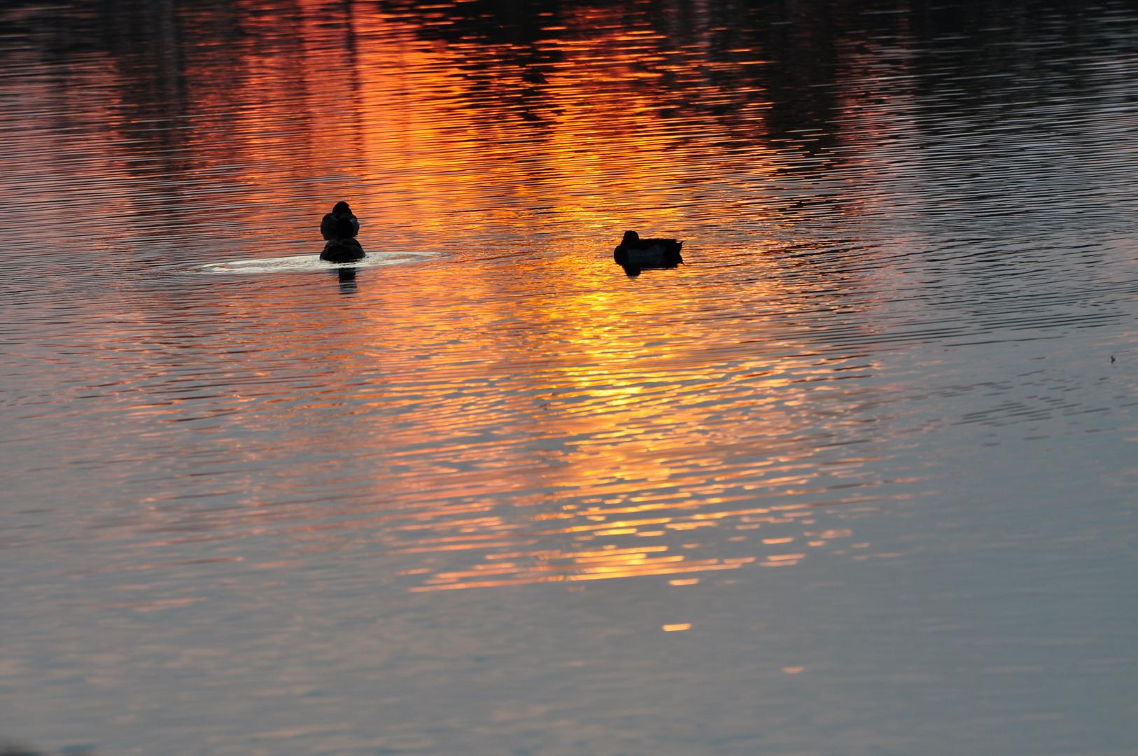 Sonnenuntergang am See in Langenhagen