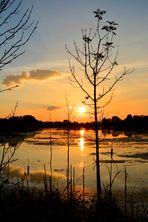 Sonnenuntergang am Tibaum
