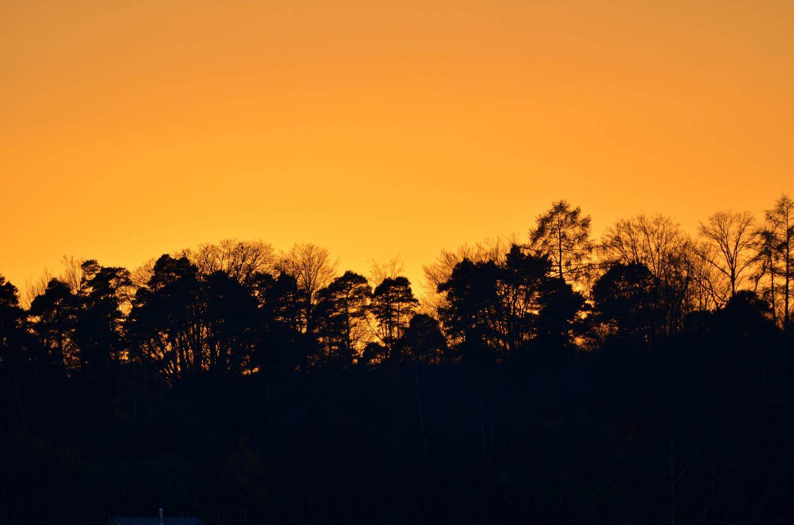 Sonnenuntergang am Wald