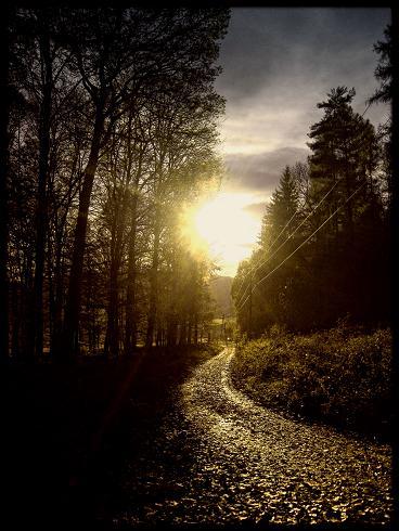 Sonnenuntergang am Waldrand