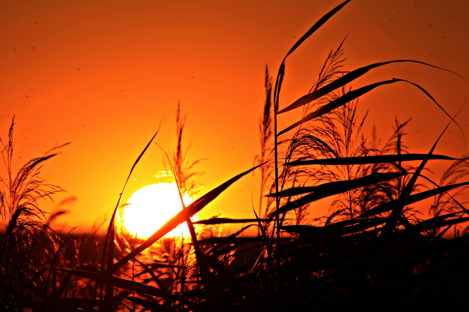 Sonnenuntergang an der Goitzsche bei Bitterfeld