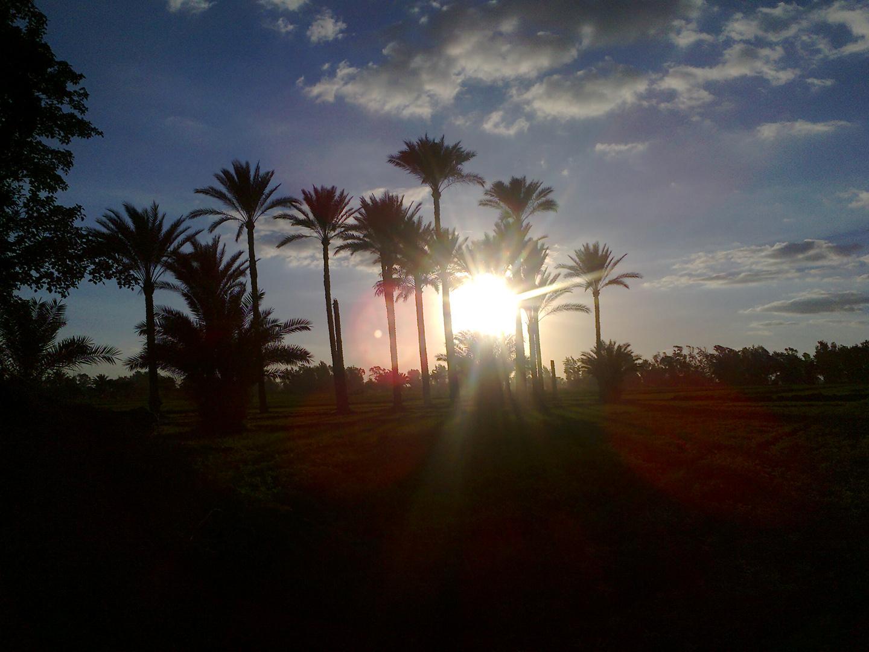Sonnenuntergang auf der Handfläche