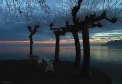 Sonnenuntergang auf der Insel Mainau.