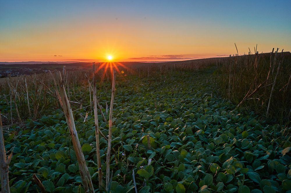 Sonnenuntergang auf einem Feld