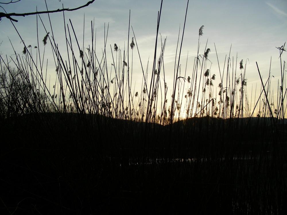 Sonnenuntergang aus der Froschperspektive
