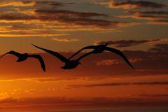Sonnenuntergang     B0002418
