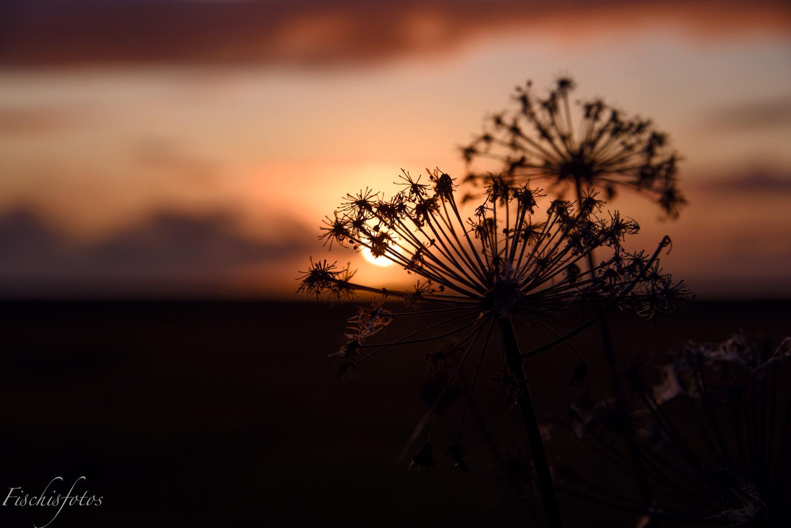 Sonnenuntergang beim Seljalandsfoss