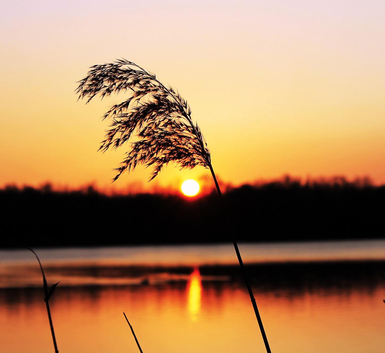 Sonnenuntergang-Heidesee