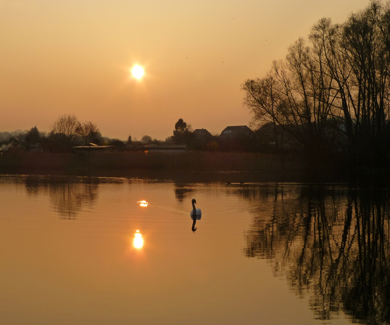 Sonnenuntergang heute Abend im Stadtpark