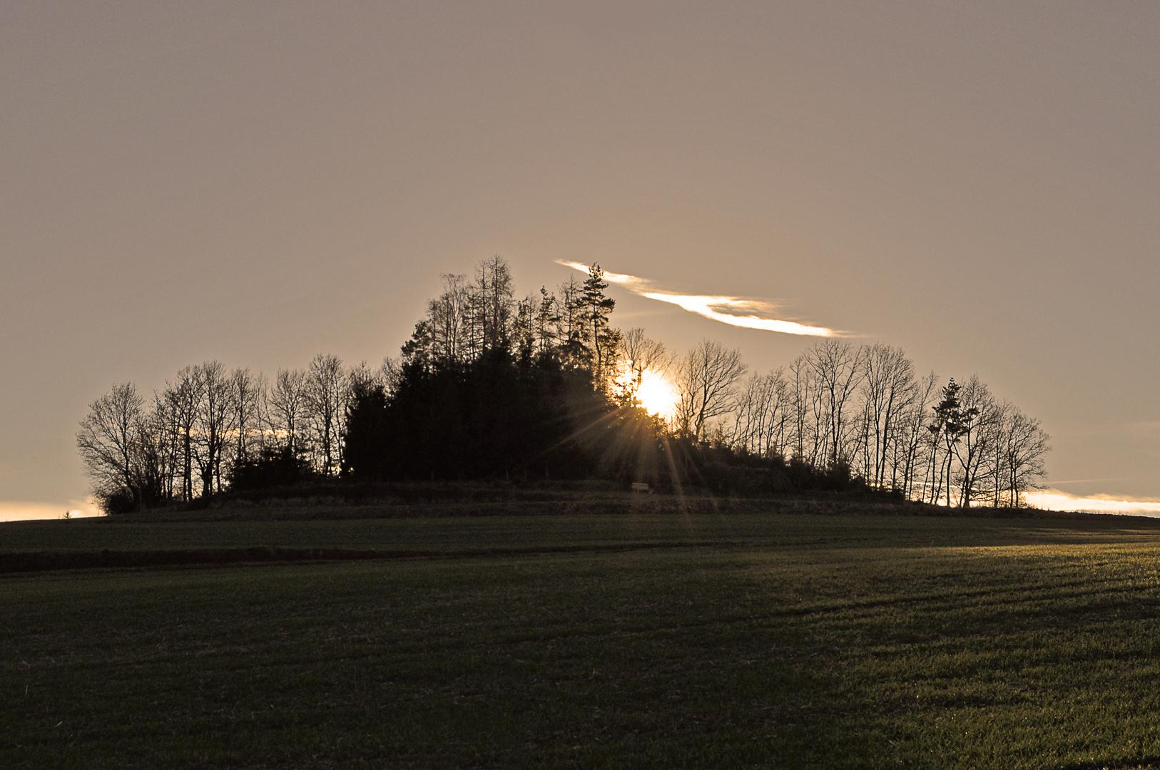 Sonnenuntergang hinter einem kleinen Wäldchen bei Weißbach im Erzgebirge