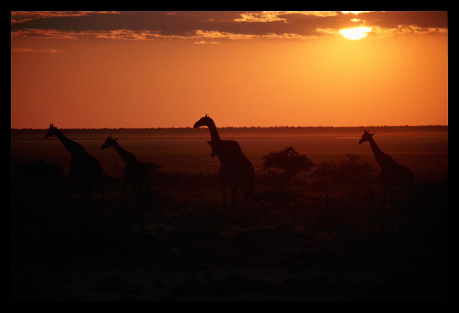 Sonnenuntergang im Etosha Nationalpark