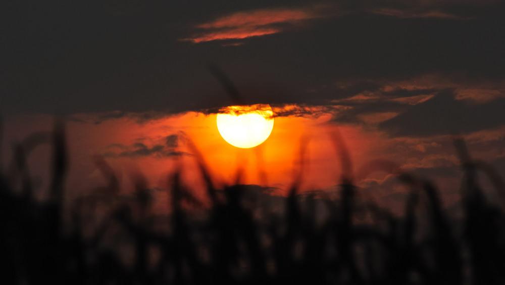 Sonnenuntergang im Kornfeld