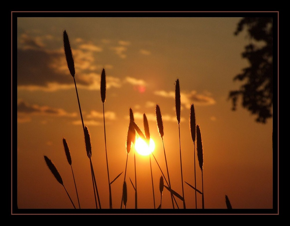 Sonnenuntergang im Mai 1