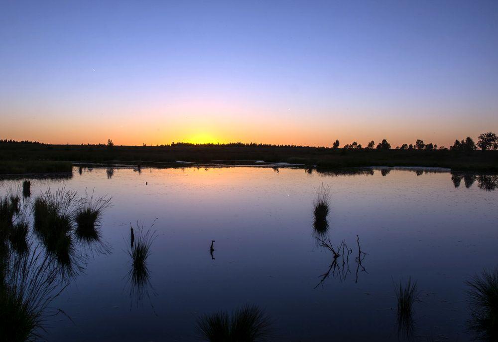 Sonnenuntergang im Moor