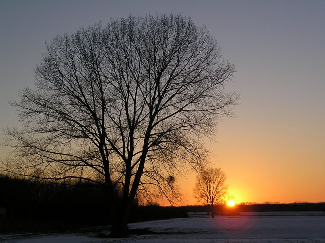 Sonnenuntergang im Ried II