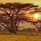 Sonnenuntergang im Shaba Nationalpark