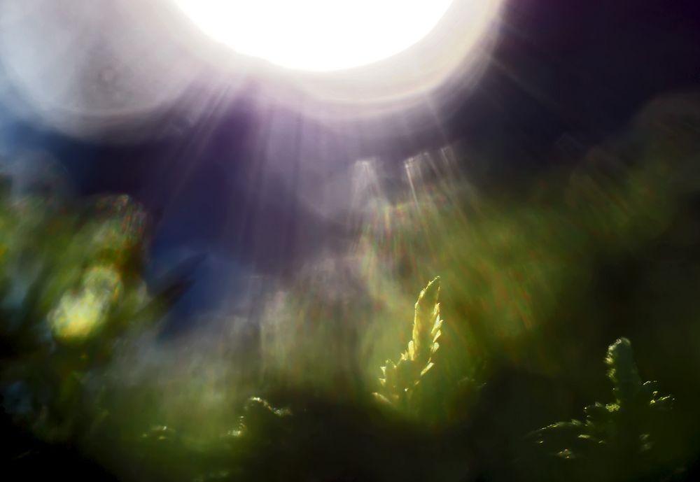 Sonnenuntergang im tiefen Wald! - Crépuscule en pleine forêt!