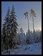 ...sonnenuntergang im tiefen winterwald...