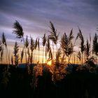 Sonnenuntergang im Winterschilf