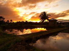 """"""" Sonnenuntergang in den Reisfeldern """" , Pang-pang - Aklan - Panay"""