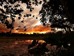 """"""" Sonnenuntergang in den Reisfeldern1 """" , Pang-pang - Aklan - Panay"""