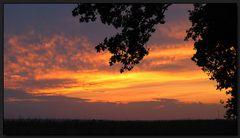 ...Sonnenuntergang in der Eichenallee...