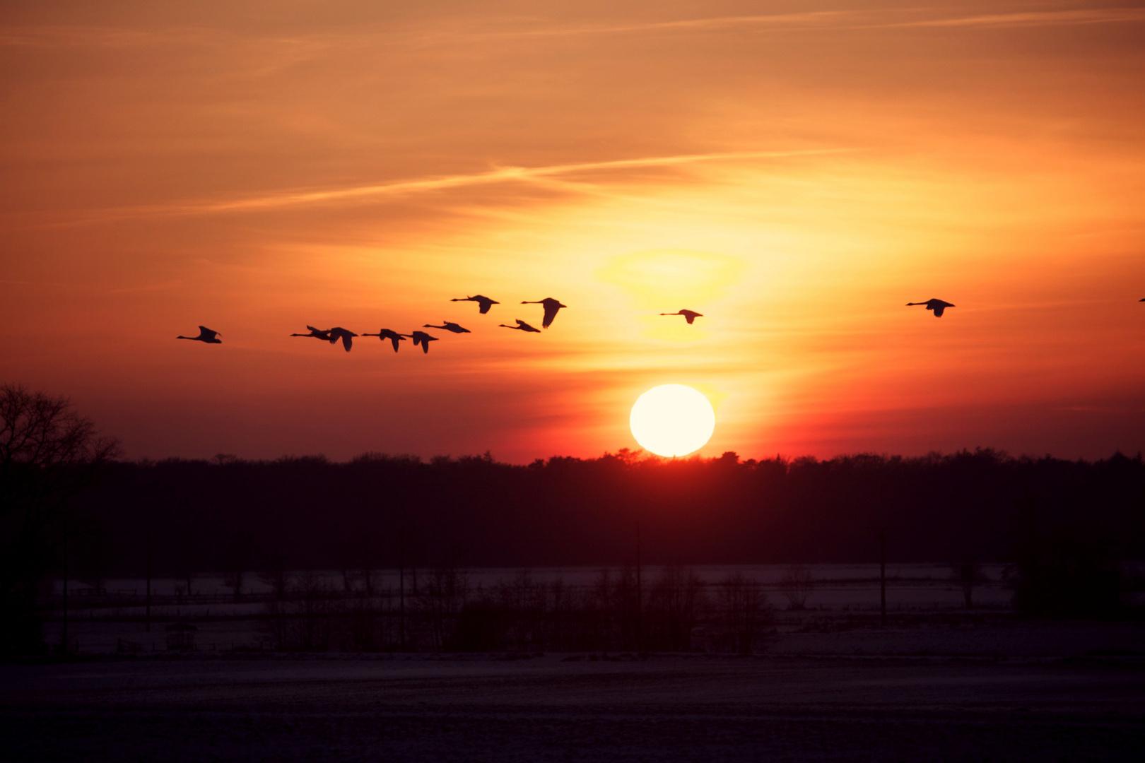 Sonnenuntergang in der Elbmarsch