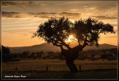 Sonnenuntergang in der Extremadura 2