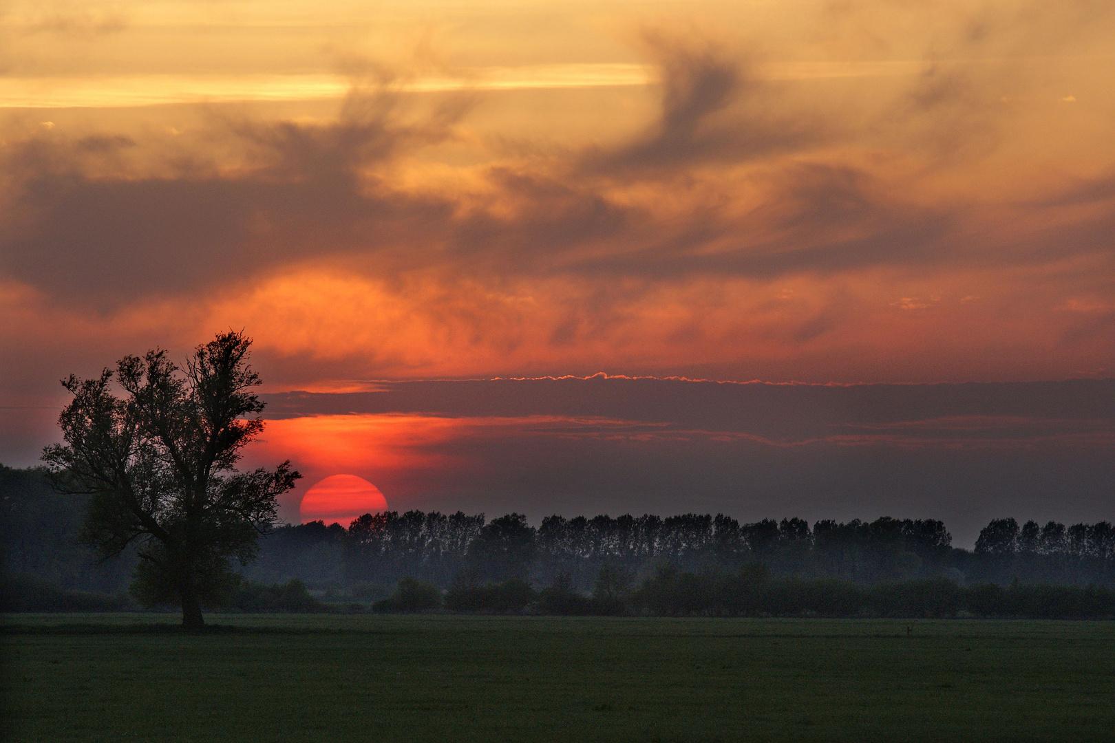 Sonnenuntergang in der Lewitz