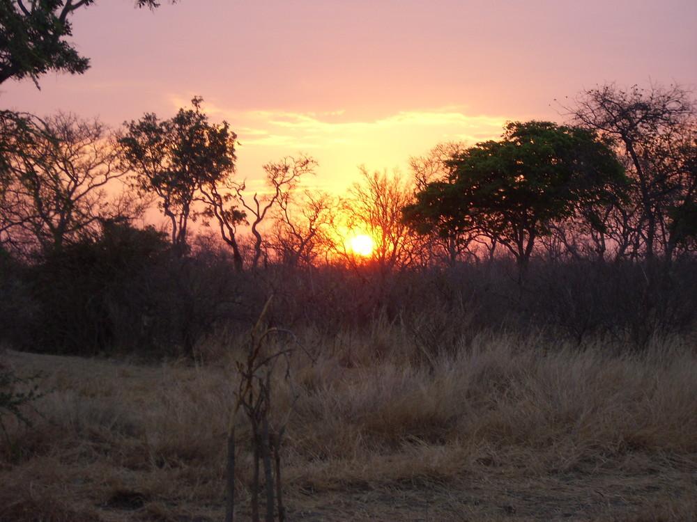 Sonnenuntergang in der Steppe von Malawi