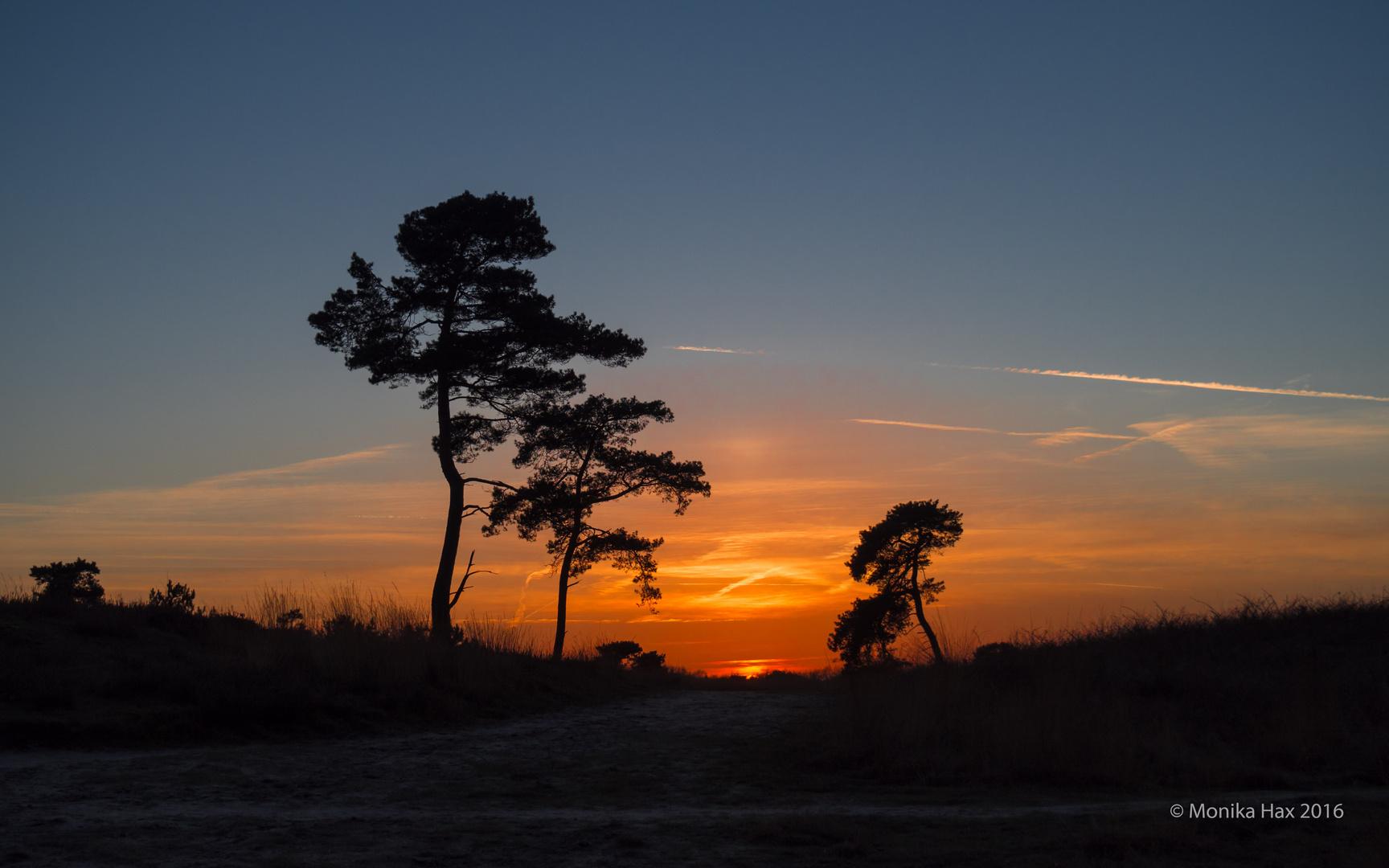 Sonnenuntergang in het Bergerbos - Afferden
